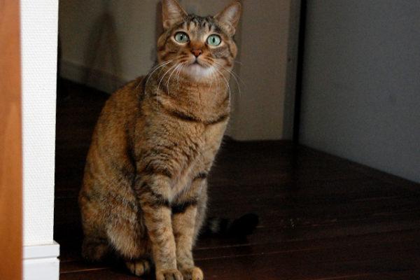 猫営業部長の「商品梱包編」