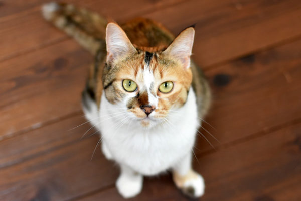 みかん新猫営業部長就任
