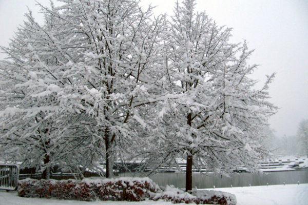 雪のデンマーク