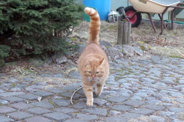 フィンランドで宿猫に再会