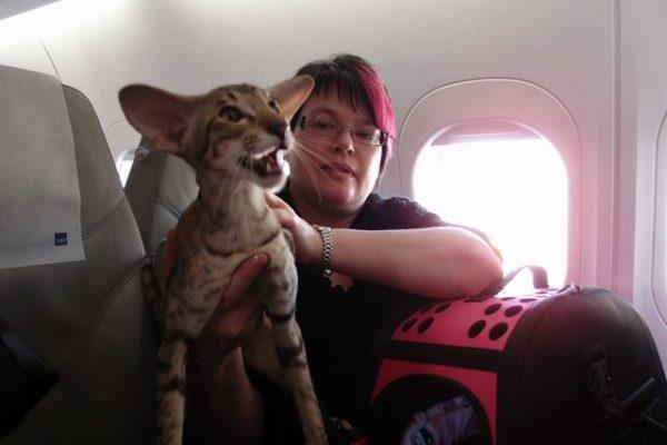 フィンランドで猫チャンピオンと会う